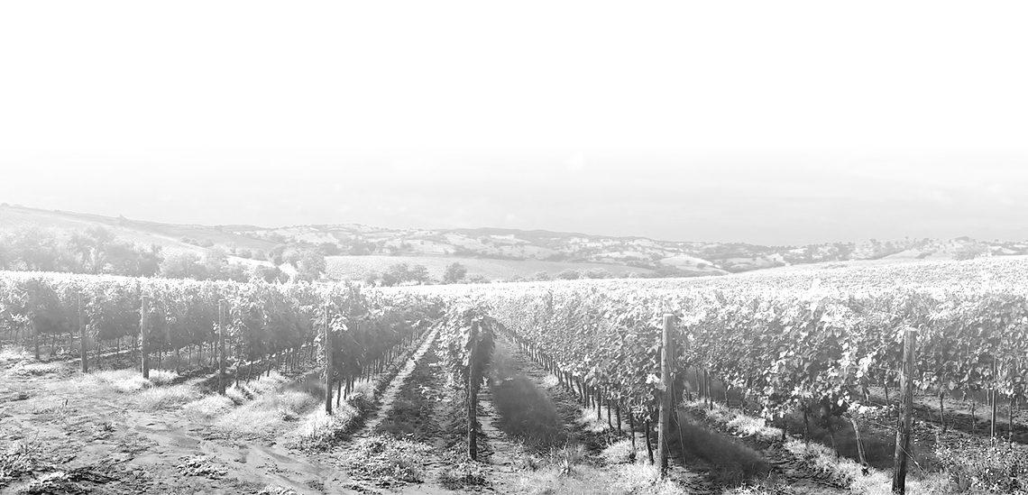 Australian Wine Industry